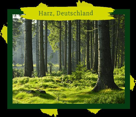 Schutz der heimischen Wälder